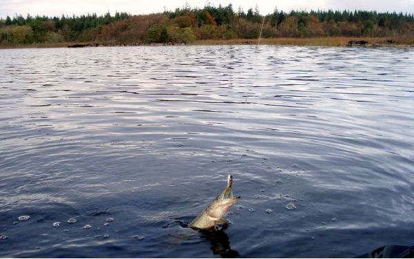 Первая щука на озере Корриб