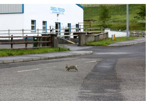 Кролик, перебегающий через дорогу