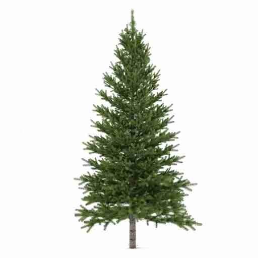 Как выбирать елку