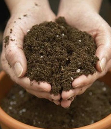 как выбрать грунт для растений
